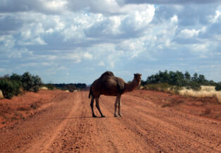 camelroad