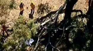 Branch falls on cmaper sparking grey nomad worris