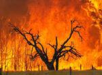 Bushfires in South Australia
