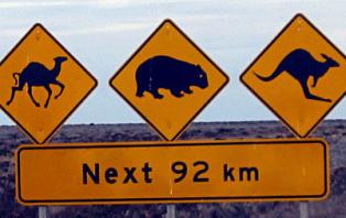 Kangaroo avoiding radar for grey nomads