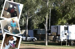 Heritage Caravan Park in Alice Springs welcomes dogs