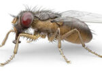 Grey nomads worried about insect issues