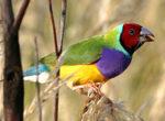 Kakadu Bird Week