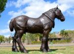 Collinsvale pit pony
