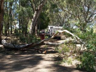 Gum tree falls