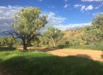Todd River greenery
