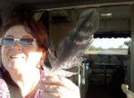 feather retrieval