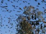 colony of bats