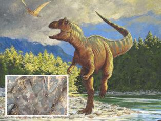 dinosaur footprint vandalised