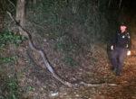 scrub python near Cairns