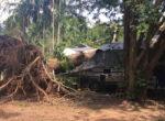 Falloing tree at Boomerang caravan park in Darwin