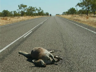 wildlife killed