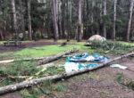 Lane Poole tree falls on cmapers