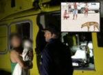 dingo attack on Fraser Island