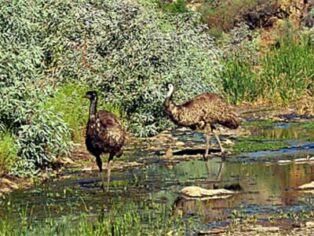 Emus and other wildlife are on grey nomads' must-see lists