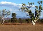 Flinders Ranges is great for grey nomads