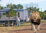 Monarto safari park camping for grey nomads
