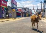 wild animals in cities