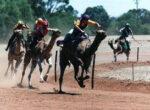 Boulia-Camel-Races