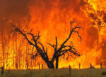 Authorities warn that conditions are ripe in SA for more big bushfires