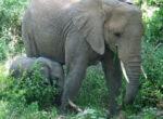 Elephants in the Australian outback