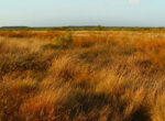 Open grassland is the bush of the future