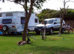 Grey nomads outside their caravan