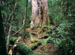 Grey nomads visit Smithton in Tasmania