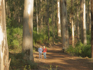Grey nomads head t Southern Forests