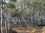 The road through the beautiful Wielangta Forest.