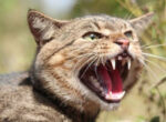 Feral cats noticed by grey nomads