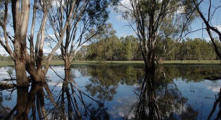 Barmah attracts grey nomads in caravans