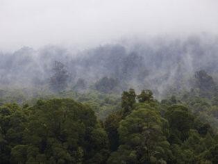 Tarkine forest attracts grey nomads to Tasmania