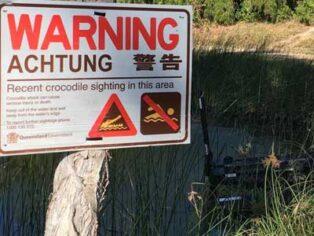 Crocodile in Townsville caravan park lake