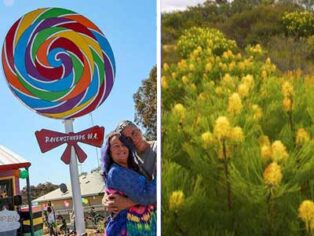 Ravensthorpe unveils big lollypop