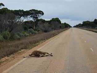 Grey nomads asked to record roadkill