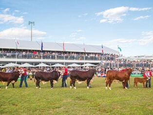 Beef Australia Rockhampton for grey nomads